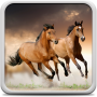 icon Horses Live Wallpaper