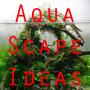 icon Aquascape Ideas